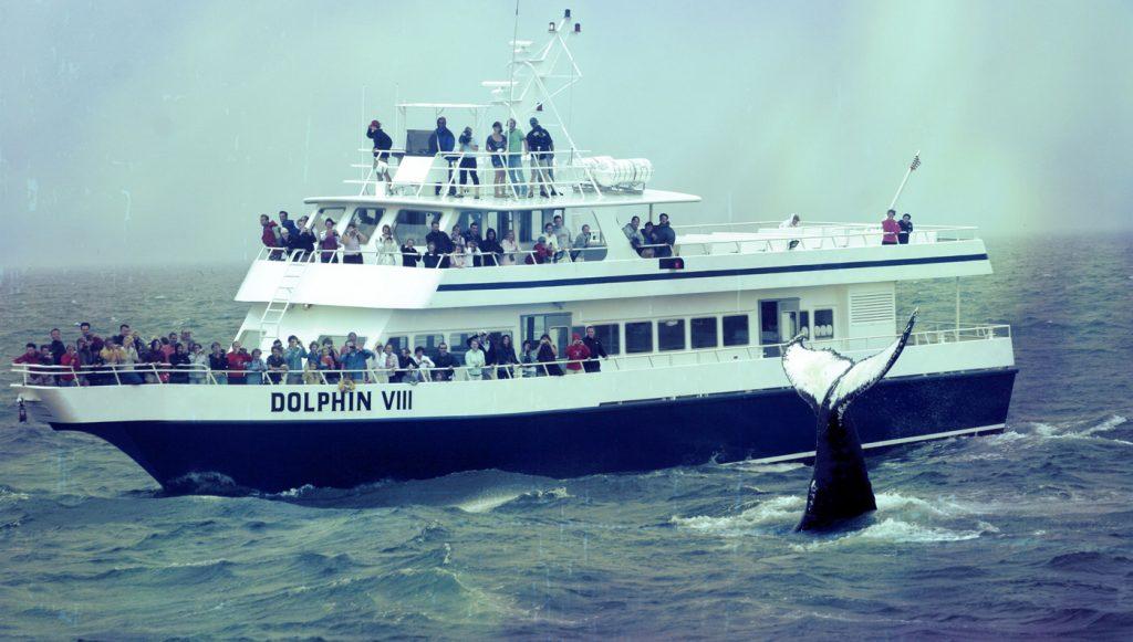 dolphin fleet provincetown cape cod